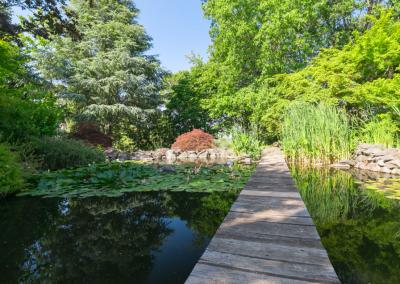 The Golden Villa - the Japanese garden